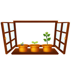 Three potted plants window on white vector