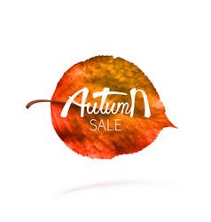 stock sale autumn falling vector image