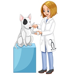 Vet wrapping dogs leg vector