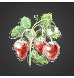 Watercolor drawing of strawberry vector image