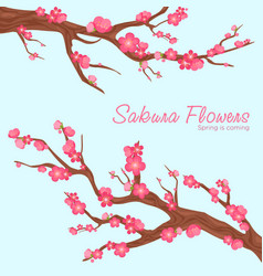 pink beautiful sakura vector image