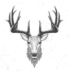 deer head on white vector image vector image
