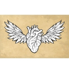 Anatomical heart with wings symbol vector