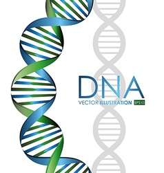 DNA design vector image vector image