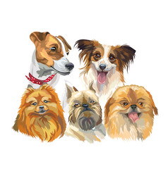 set of small dog breeds vector image