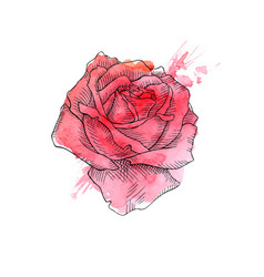 beautiful red rose hand drawn vector image