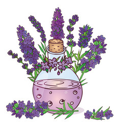 lavender-05 vector image