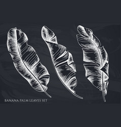 set hand drawn chalk banana palm leaves vector image