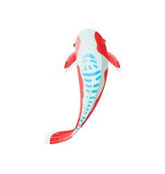 shusui carp koi fish traditional sacred japanese vector image