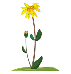 An arnica flower or color vector