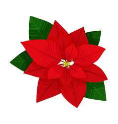 Green and red leaves beautiful plant poinsettia vector