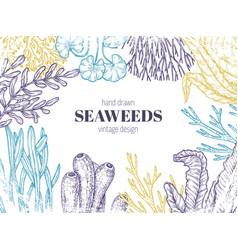 Seaweed background natural coral seaweeds art vector