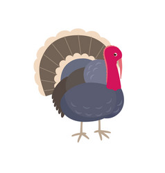 turkey flat isolated on white vector image