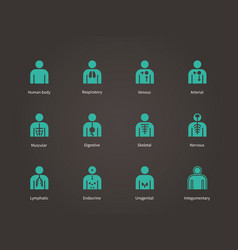 anatomy human systems icons set vector image