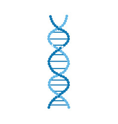dna molecules structure or spiral chromosome vector image