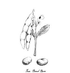 Hand drawn fresh green fava bean vector