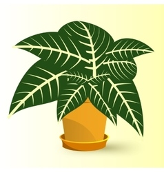 sanchezia plant in a pot vector image