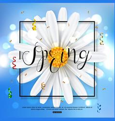 chamomile spring flower on blue background vector image vector image