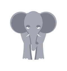 elephant front view isolated big wild african vector image