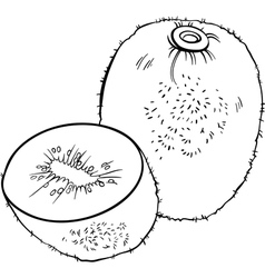 kiwi fruit for coloring book vector image vector image