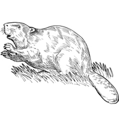 European beaver or Eurasian beaver drawing vector image