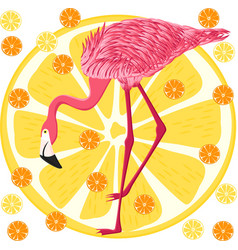Pink flamingo on citrus background vector