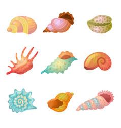 seashell sea weather item starfish colorful sand vector image
