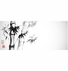 Bamboo trees on white background traditional vector