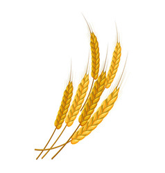 bunch of wheat icon cartoon style vector image vector image