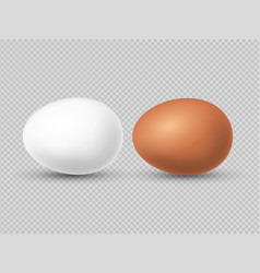 realistic brown and white chicken eggs vector image