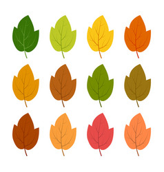 set of twelve autumn leaves vector image