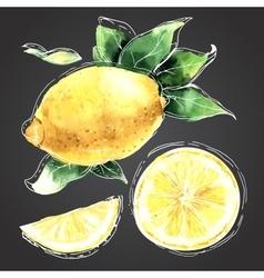 The watercolor drawn set of lemons vector