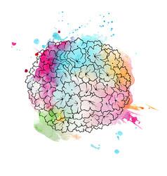 hydrangea hand drawn vector image