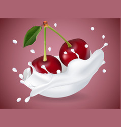juicy sweet cherry in milk splash vector image