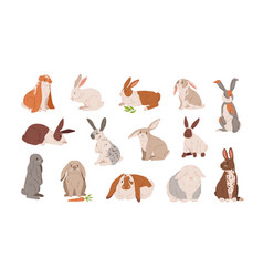 set different breed cute realistic rabbits vector image