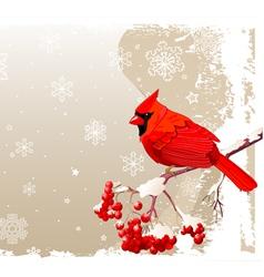 Red Cardinal bird background vector image