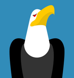Bald eagle head isolated bird an eagles face on vector