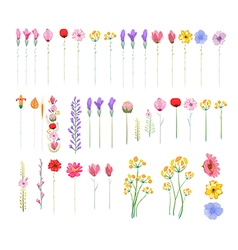 Floral set of graphic elements vector