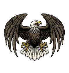 Hand drawn bald eagle vector