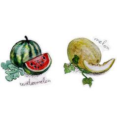 Melons in watercolor vector