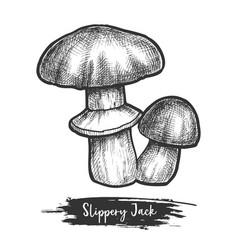 sketch bolete fungus or autumn mushroom vector image