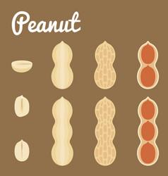 peanuts of a set of peanuts vector image