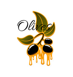olive fruit and oil drop sign for food design vector image vector image