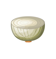White background of middle onion in closeup vector