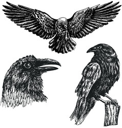 black raven bird sketch icon set vector image