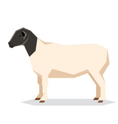 Flat geometric dorper sheep vector