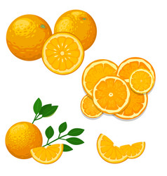 Oranges and orange products natural vector