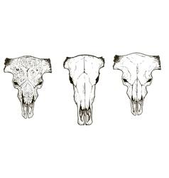 Drawing animal skulls set vector image vector image
