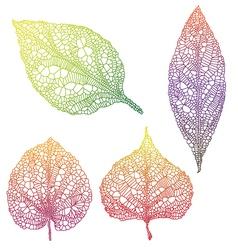 Vein leaves vector