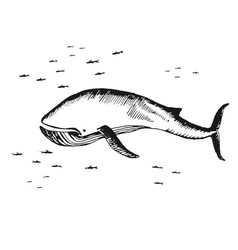 marine whale surrounded by small fish vector image vector image